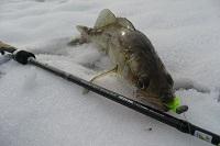 Зимняя ловля на силикон