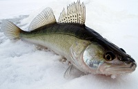 Зимняя рыбалка на силикон